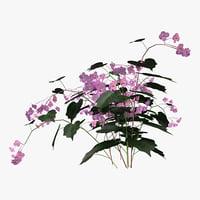 3D hardy begonia