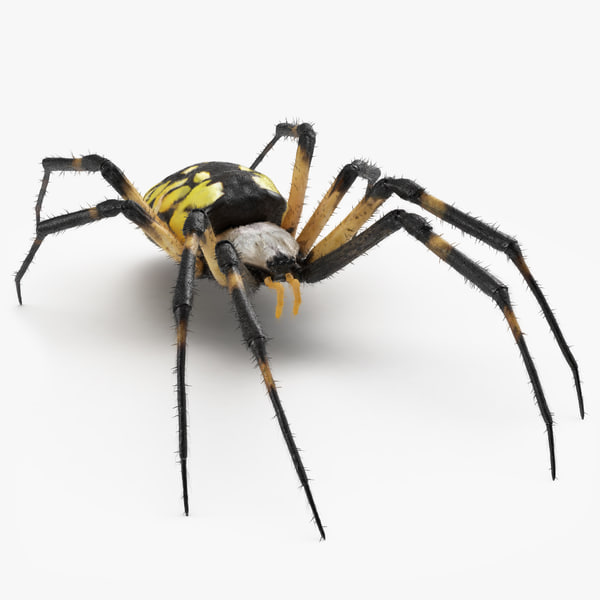 3D yellow garden spider fur