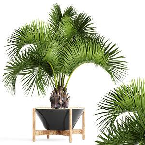butia capitata palm model