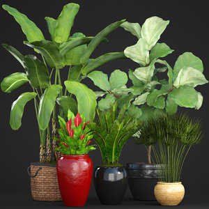 3D model plants cycas ficus
