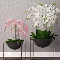 3D orchid model