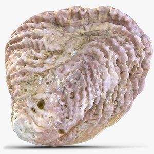 3D sea shell