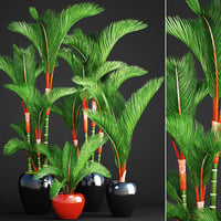 cyrtostachys renda palm set 3D model