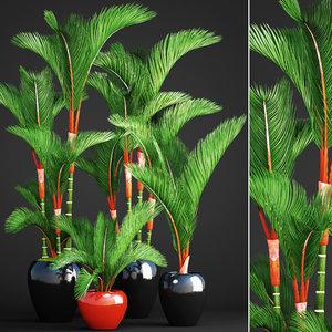 cyrtostachys renda palm set 3D model