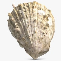 sea shell 3D