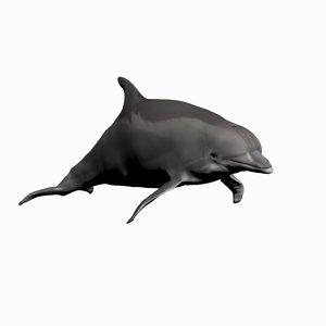 3D dolphin bottlenose