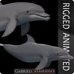 dolphin tursiops truncatus 3D