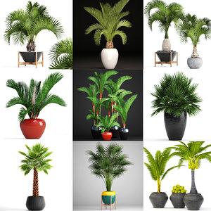 palms 14 3D model
