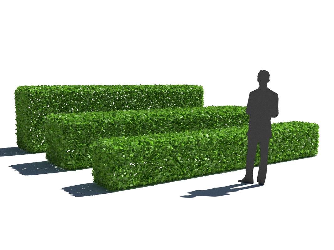 bush hedge 3D model