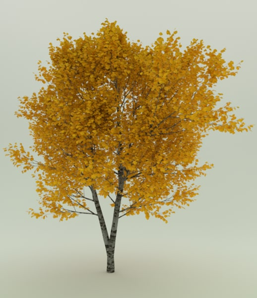 withe oak autumn leaves 3D