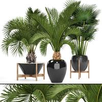 3D palms model