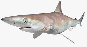 3D atlantic sharpnose shark model