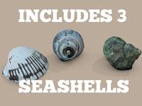 Seashell Pack (Photoscan)