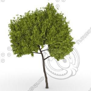 3D model honey locust tree gleditsiatriacanthos