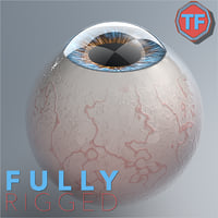 Realist Human Eye - With Rig