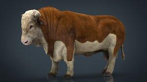hereford bull 3D model