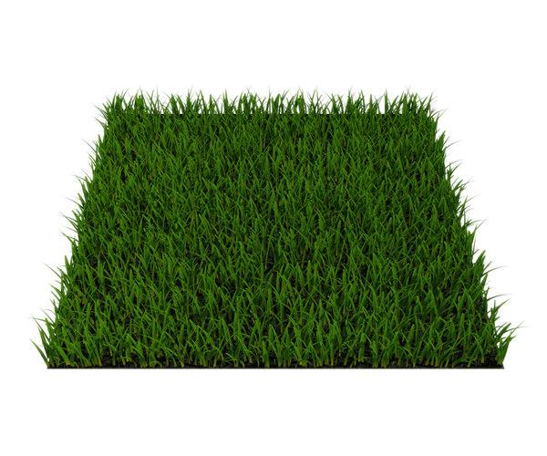 grass rass 3D model