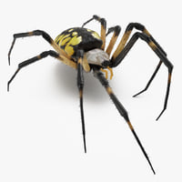 3D golden garden spider fur