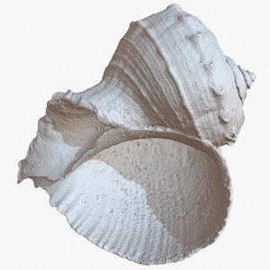 sea shell rapana 1m 3D model