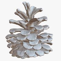 3D model fir cone 1m raw