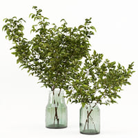 glass vases branches model