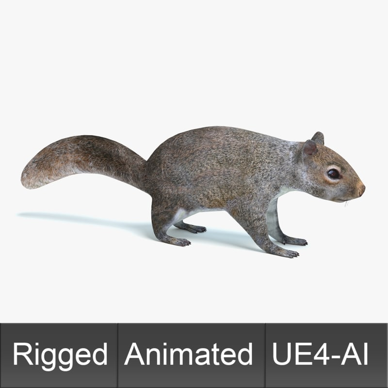 squirrel animations 3D