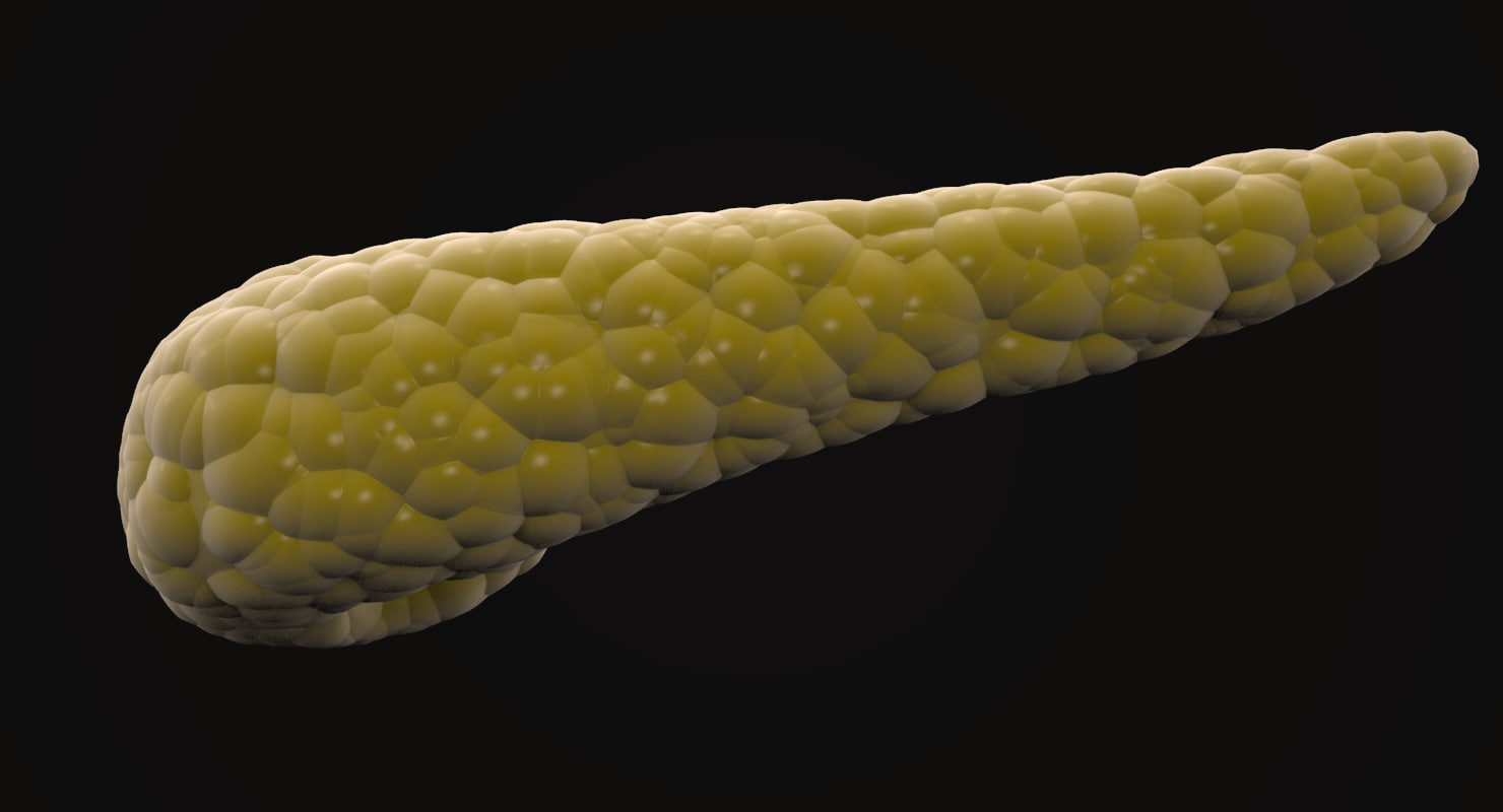 realistic pancreas 3D model
