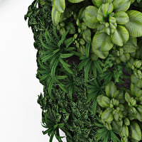 Green wall for exterior and interior