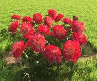 3D flowerbed peonies