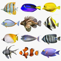 3D model saltwater fish set