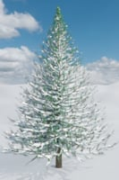 snow-covered pine tree 3D