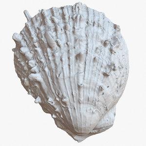 sea shell 21 raw 3D