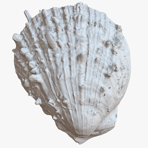 sea shell 21 raw 3D