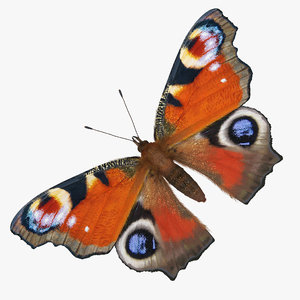 aglais io butterfly sitting model