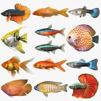 3D freshwater fish set model