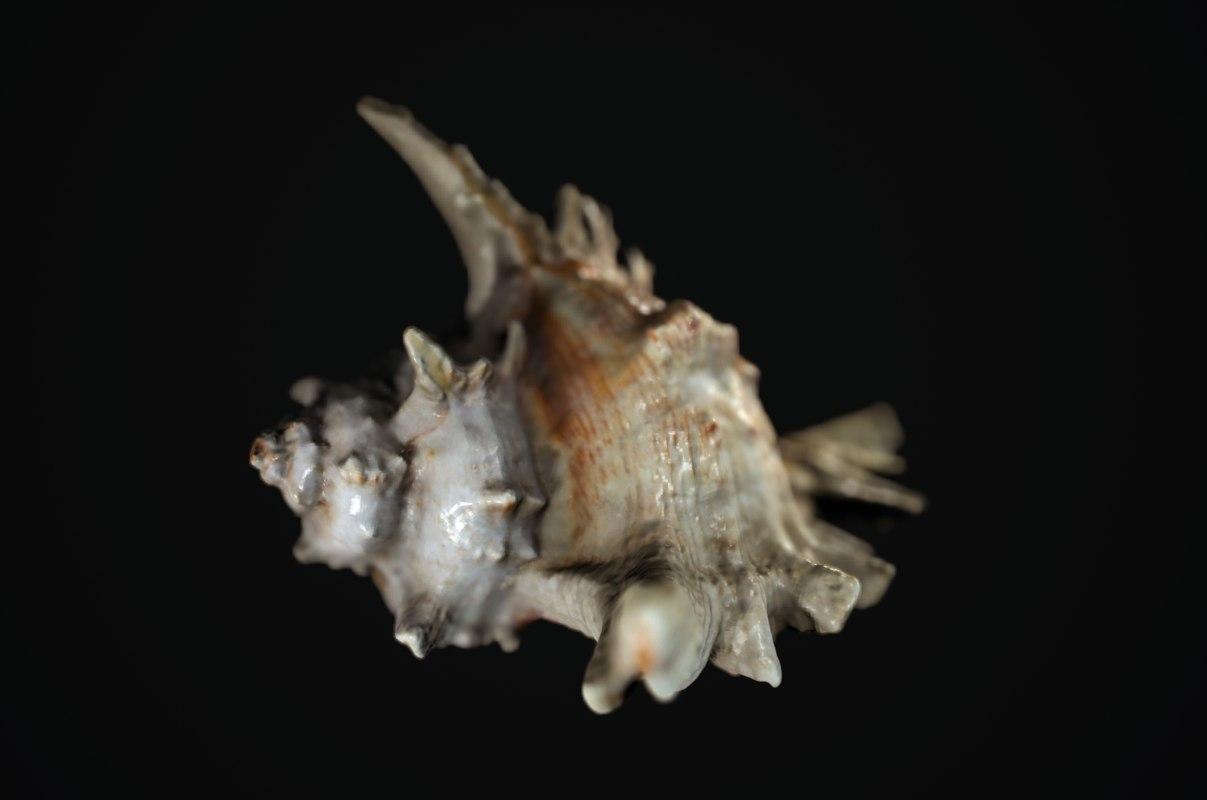 shell animal 3D model