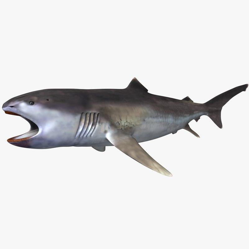 realistic female megamouth shark 3D model
