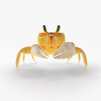 Ghost Crab Rigged