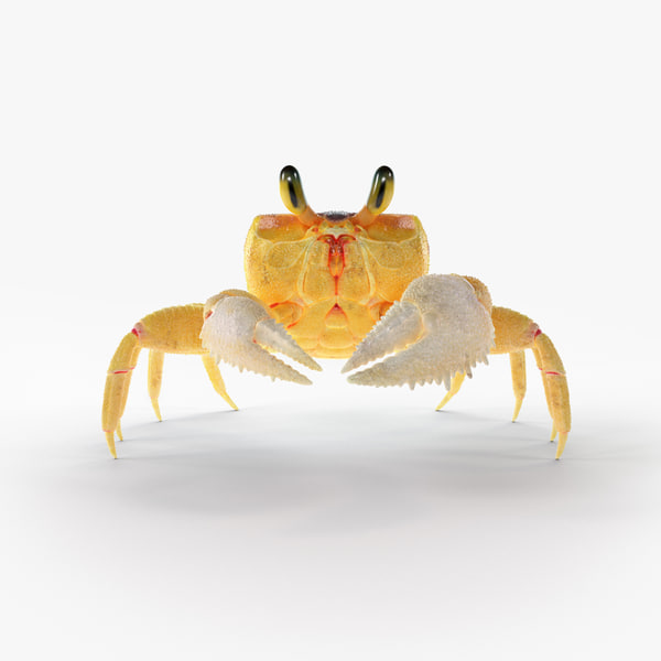 ghost crab rigged model