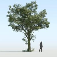 Generic Tree v2