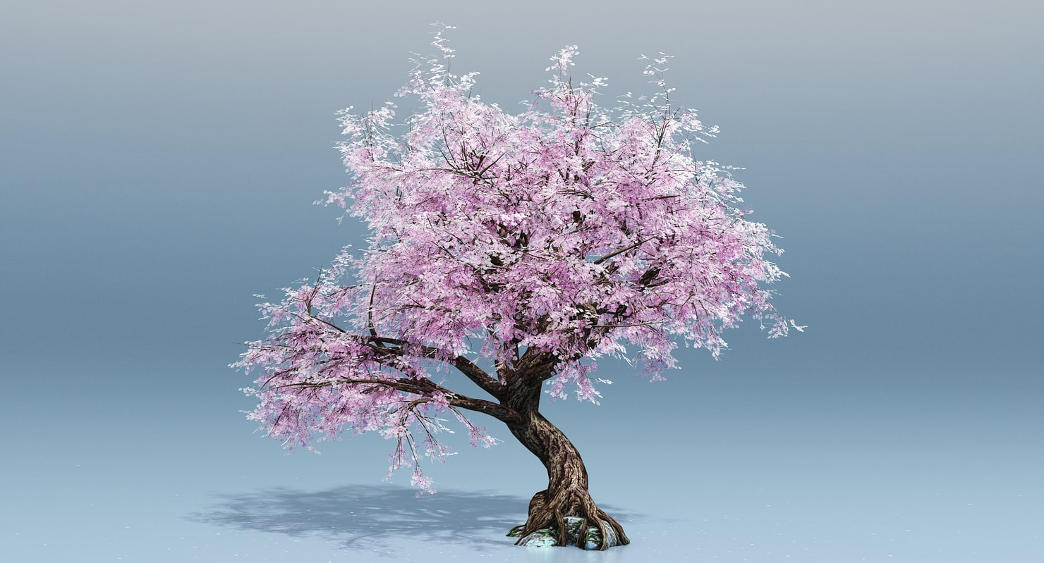 Cherry Blossom Tree 3d Turbosquid 1189864