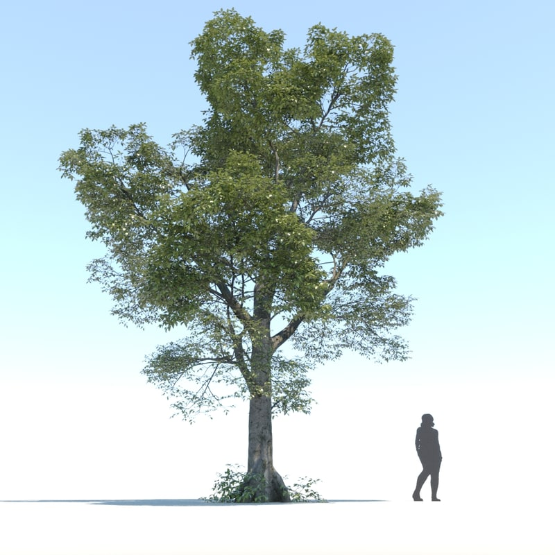 3D tree visualization nature