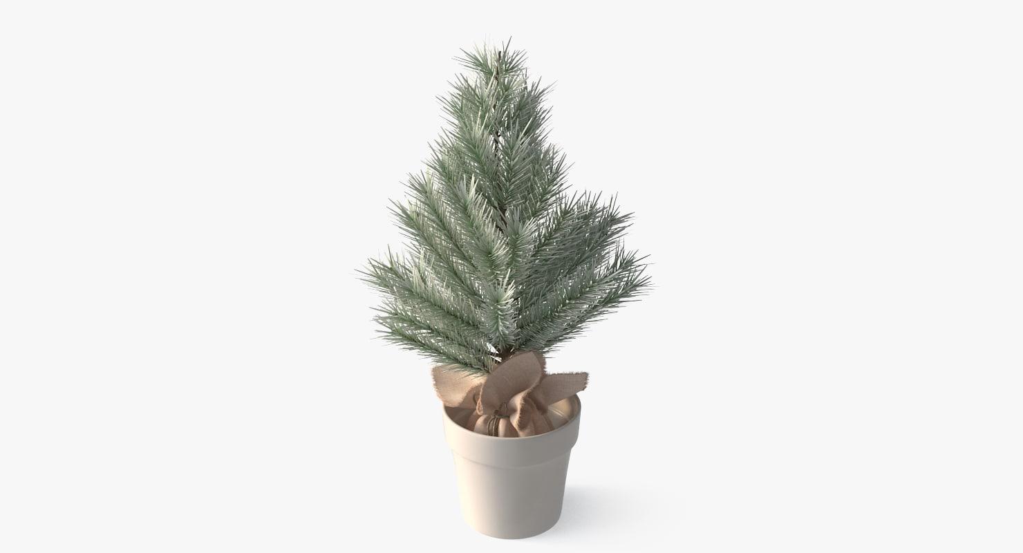 decorative spruce 3D model