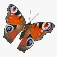european peacock butterfly sitting 3D model