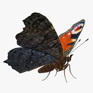3D european peacock butterfly rigged