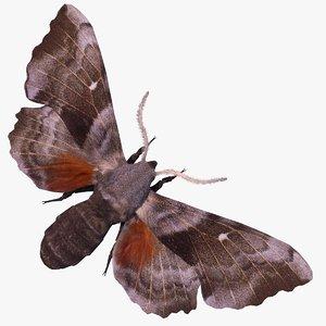 sphinx moth fur 3D