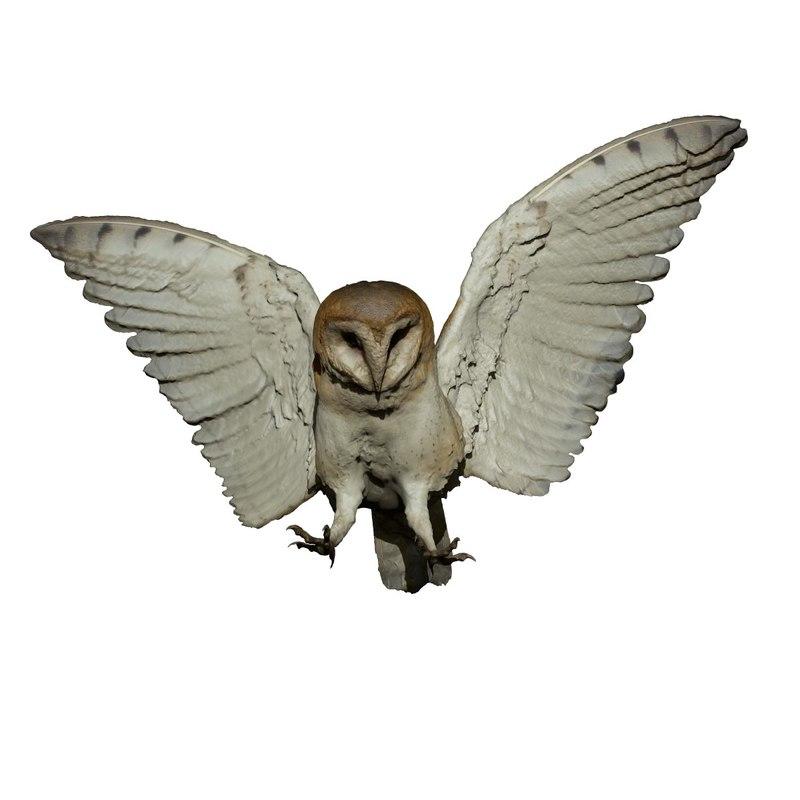 photogrammetry taxidermy barn owl model