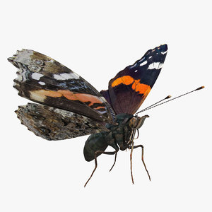 3D red admiral butterfly flying