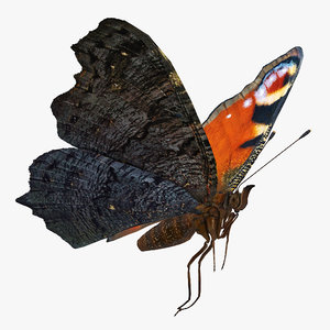 european peacock butterfly flying 3D model