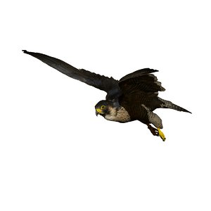 3D falcon in-flight taxidermy model